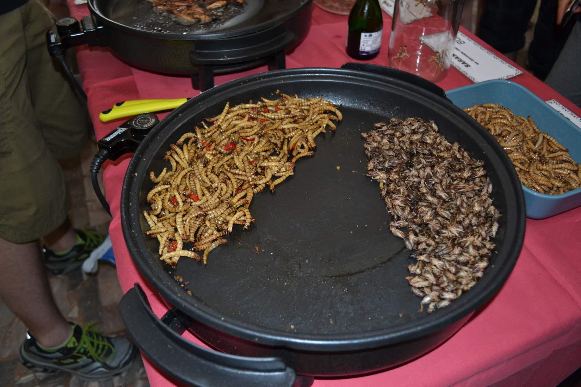 Červy a cvrčky mohli návštěvníci ochutnat na extreme food festivalu. Foto: Klára Vašíčková