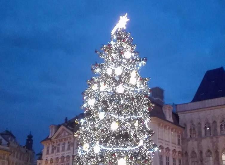 Strom na Staroměstském náměstí (Jan Středa)