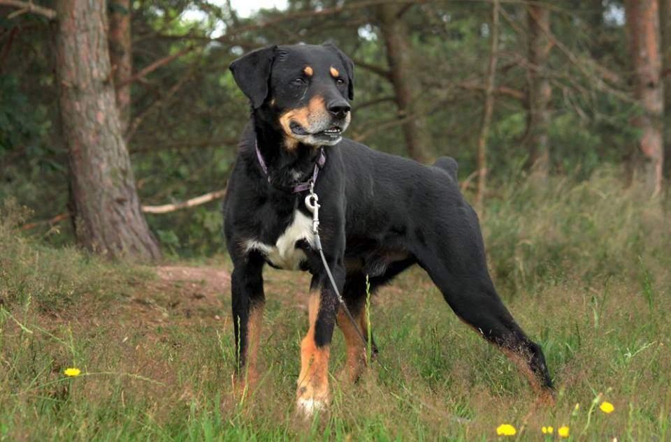 """Damián je asi devítiletý krásný pes """"samá ruka samá noha"""" je moc hodný f4ff11abfd0"""
