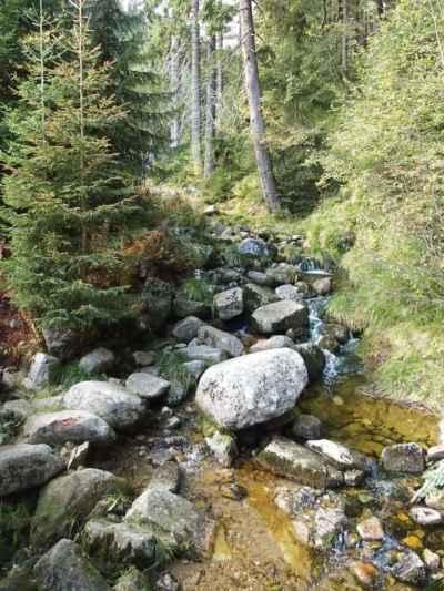 Medvědí potok