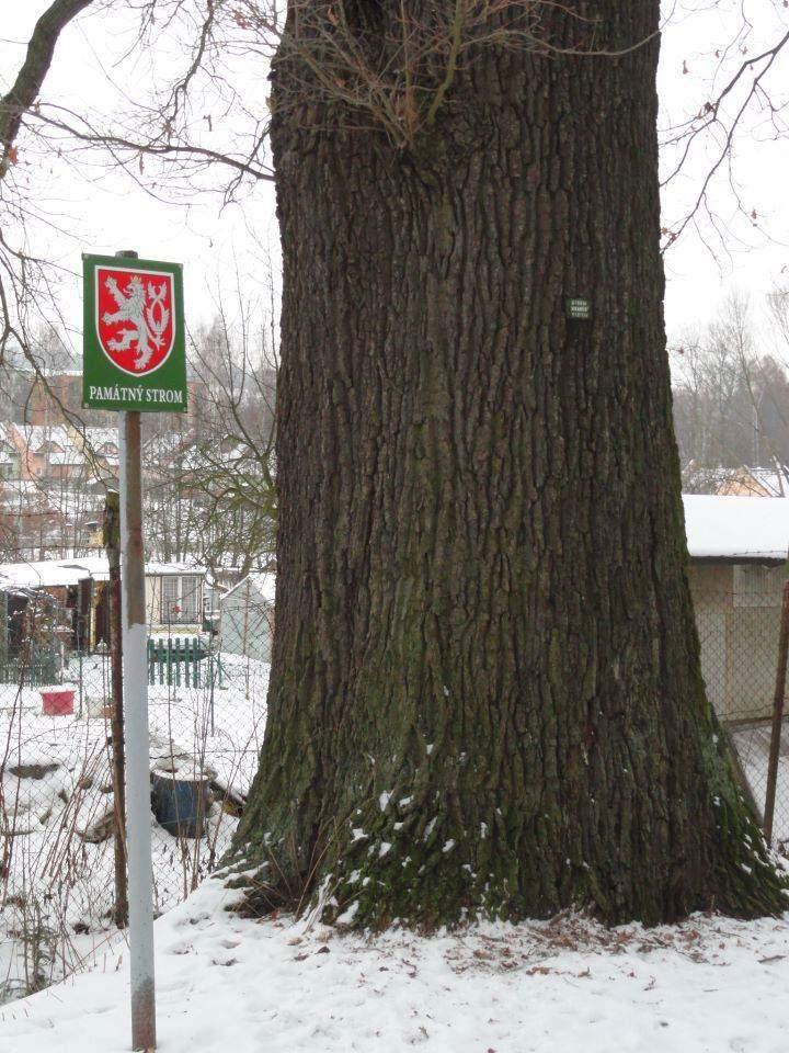Označení památného stromu