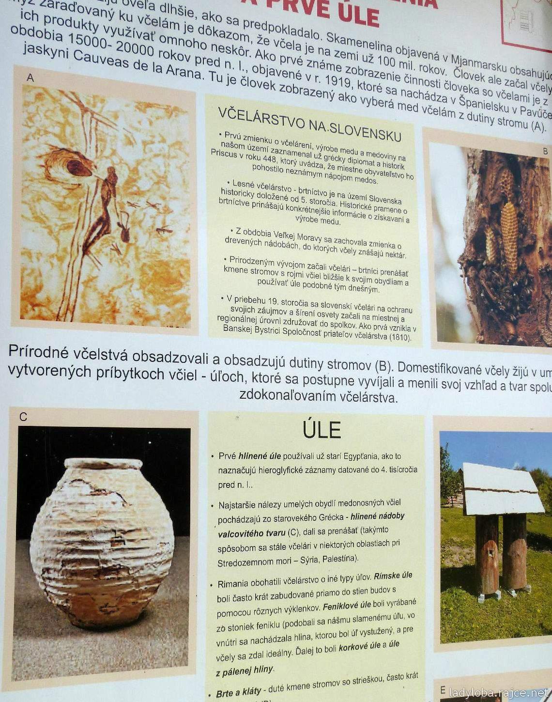 Datování včel