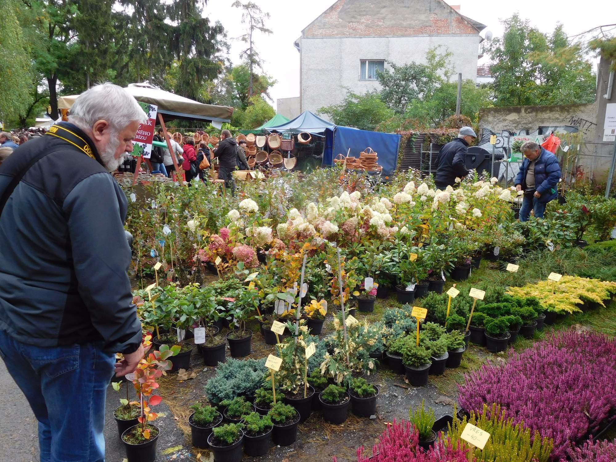 Prodejci vystavují své květiny