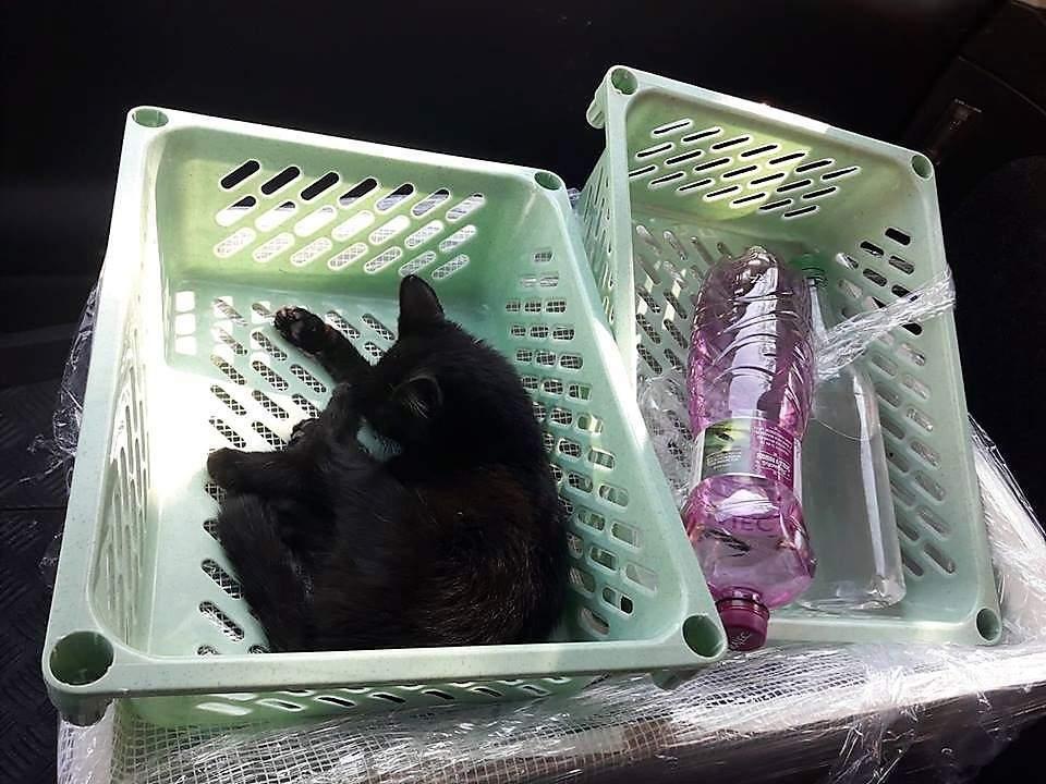 Wwww černá kočička com