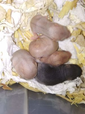 5. den 5 mláďat