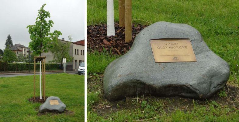 A pak je tu také několik památečních lip - tato nese jméno Olgy Havlové...